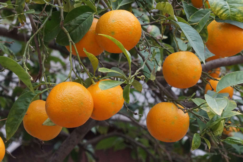 restaurante-portopetro-naranjas-soller-helados